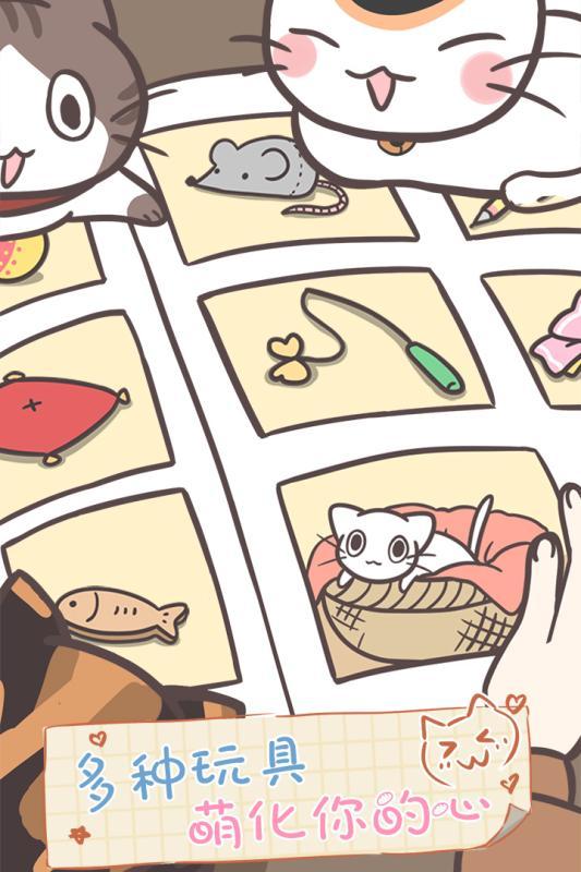 猫咪饲养日常